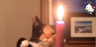 貓咪玩火1