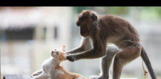 猴子欺負貓1