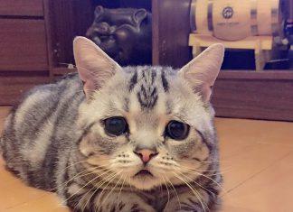 無辜表情的貓咪7