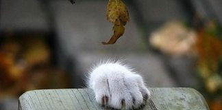 偷吃的貓10
