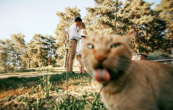 搶鏡頭的貓8