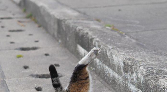 躲在水溝的貓5