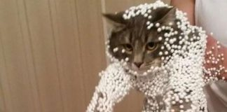 保麗龍球貓