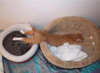 橫躺在貓窩睡覺的貓
