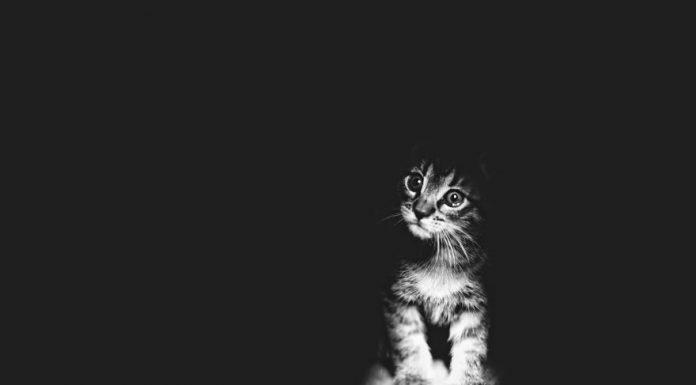黑白照的貓3