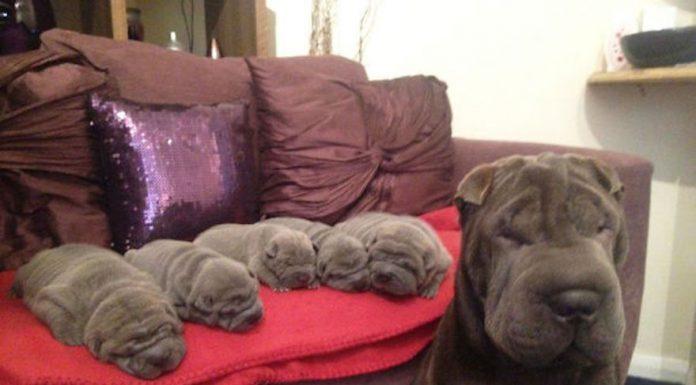 狗媽媽和小狗7