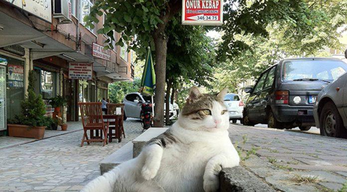 慵懶的貓咪