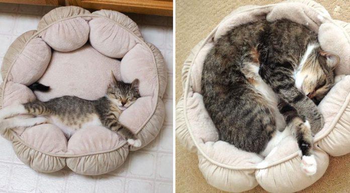 貓咪成長照18
