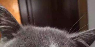 被蜜蜂叮的貓5