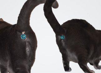 有屁股吊飾的貓2