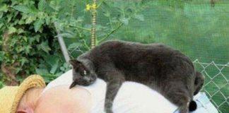 躺在人的背上的貓