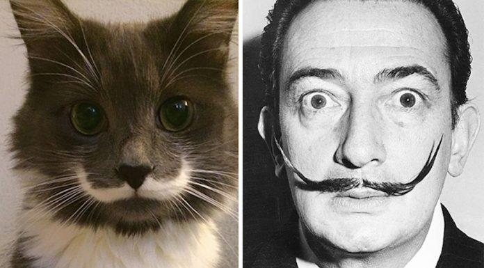 模仿貓12