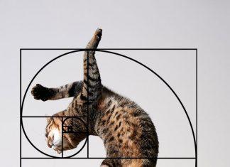 黃金比例的貓5