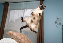 飛行貓咪9