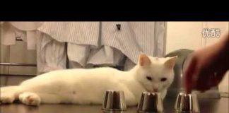 猜杯子貓1
