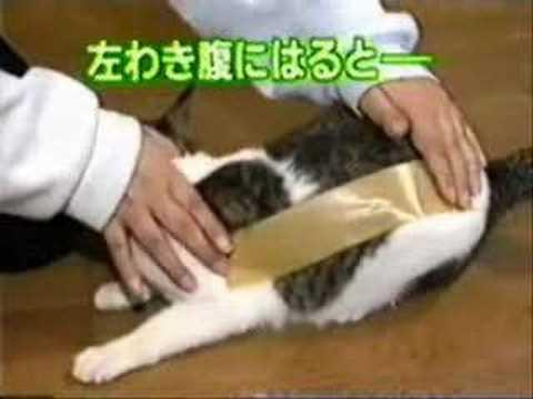 貓被貼膠帶1