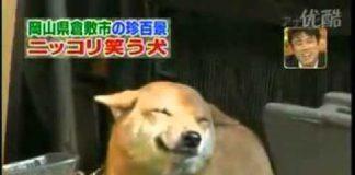 微笑的狗20