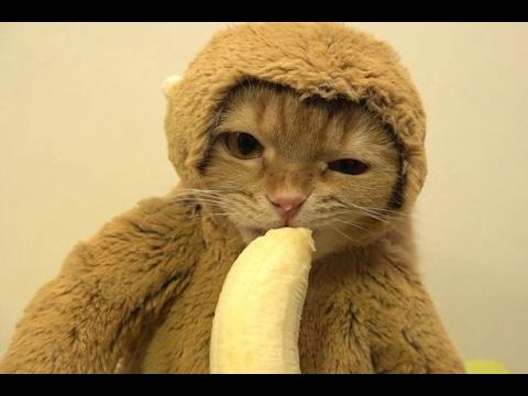 貓吃香蕉1