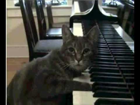 彈鋼琴的貓1