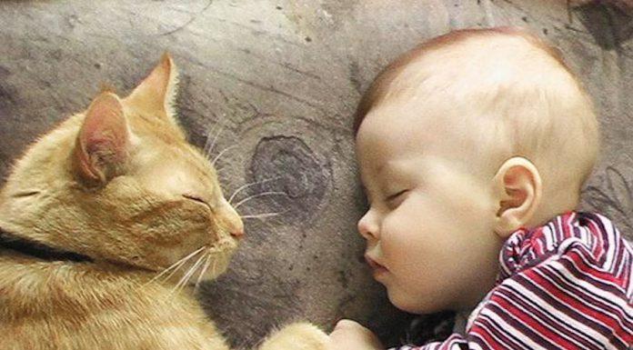貓與小孩7