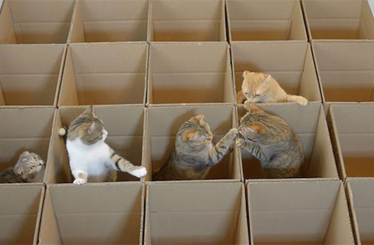 紙箱迷宮3