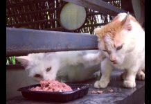 搶食的貓1