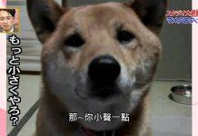 控制音量的狗1