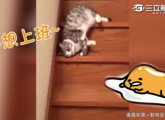 滑樓梯的貓1