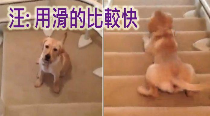 滑樓梯的狗1