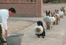 排隊等晚餐的狗