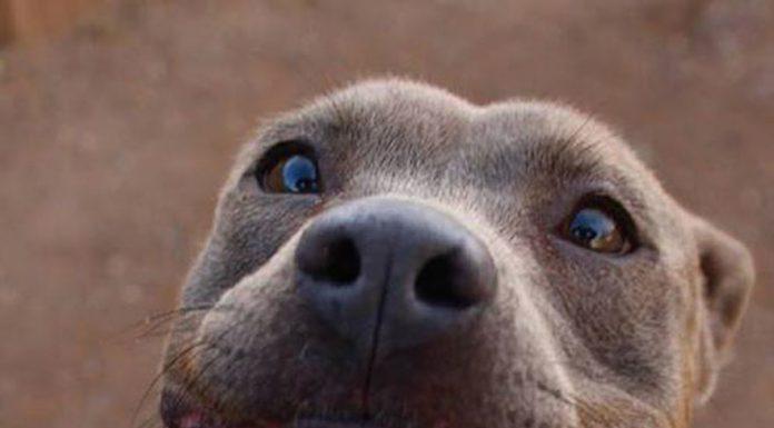 微笑的狗2
