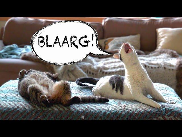 發出怪聲的貓