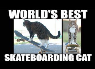 貓溜滑板3