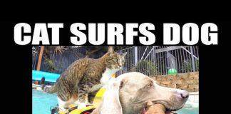 貓與狗游泳1