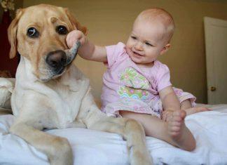 狗和小孩38