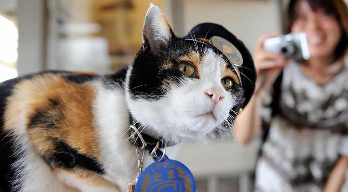 鐵路值勤的貓咪3