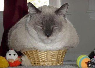 擠在小空間的貓3