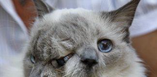 雙臉貓32
