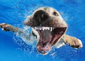 狗水下照3