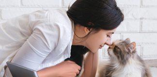 表達愛意的貓